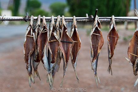Air-dried fish, Issy Kul Lake, Kyrgyzstan