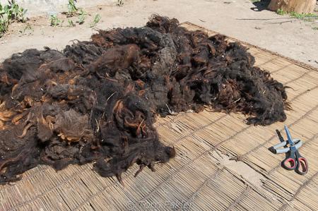 cleaned sheep's wool
