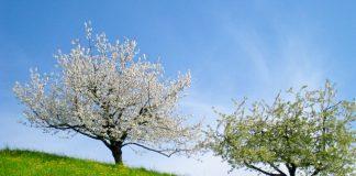 Fricktaler Chriesiwäg (Frick Valley cherry trail), Switzerland