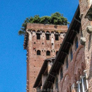Guinigi Tower, with its rooftop hanging garden, Lucca, Italy