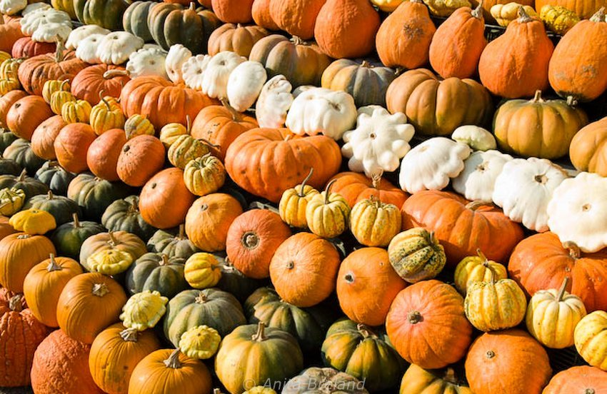 Pumpkin mania in southern Germany