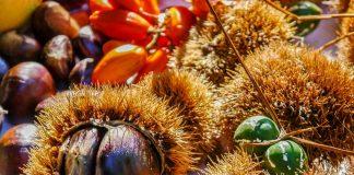 Switzerland celebrates the chestnut