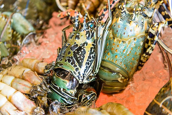 Lobster on display at The Kingsbury's Ocean restaurant