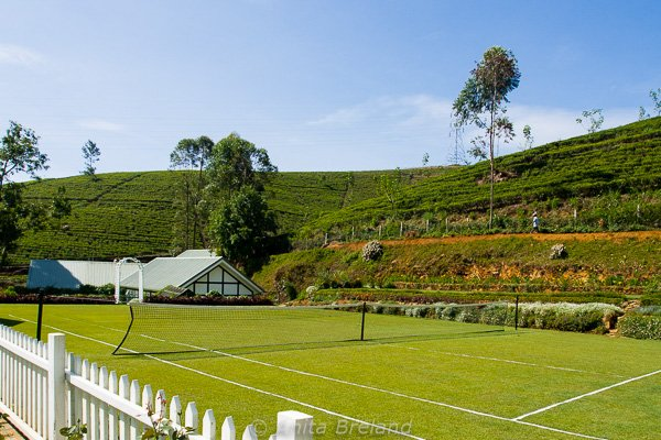 Langdale tennis court with tea plantation in the background