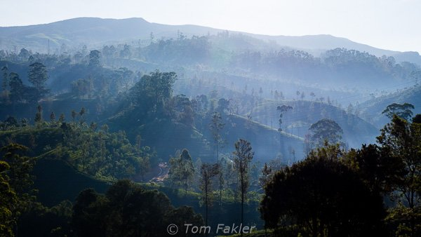 Roling hills of the tea plantation with fog