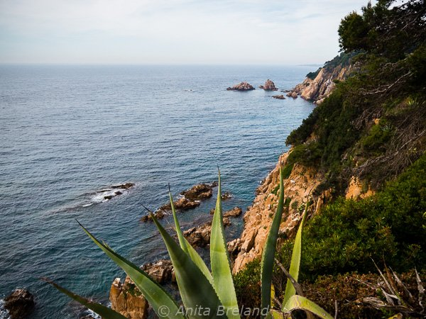 "The ""Wild Coast"""