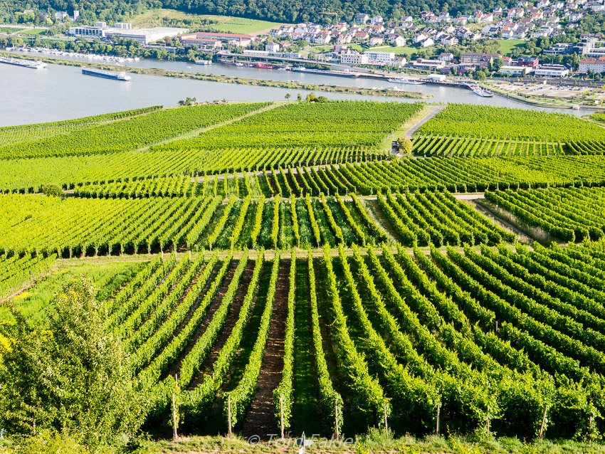 Touring the Rheingau