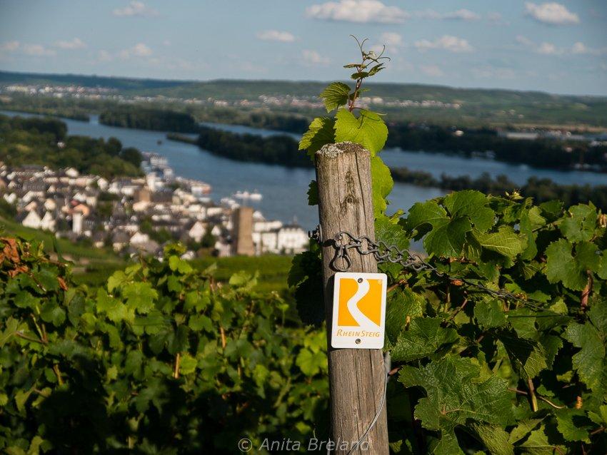 Rheinsteig cycling trail