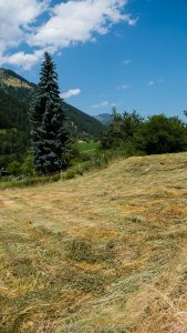 Hay field in Graubünden, Switzerland