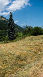 Hay field in Graubünden, Switzerland