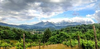 Vineyard in Lunigiana, Tuscany