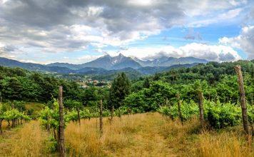 Vineyard in Lunigiana, Tuscany
