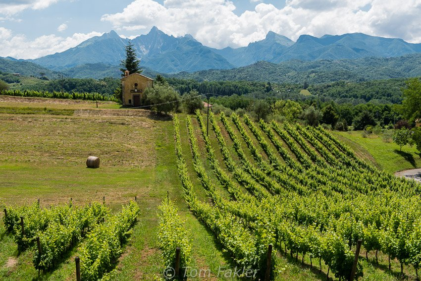Lunigiana vineyard near Aulla