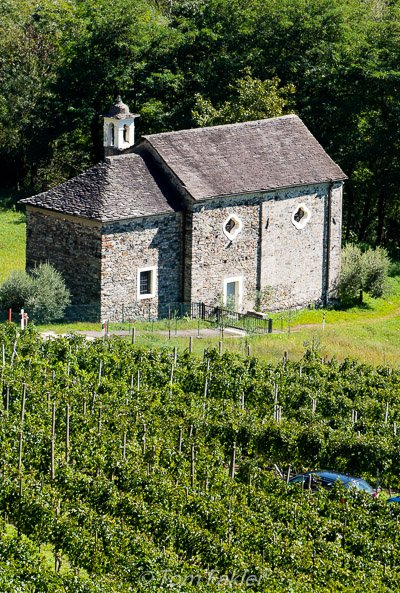 Ticino, tiny vineyard