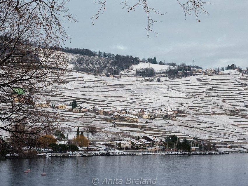 Epesses, nestled on a hillside above Lake Geneva