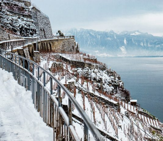 Lavaux vineyard terraces in winter