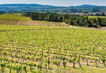 Penedès wine regions