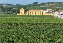 Lisbon wine region