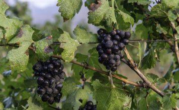 GranMonte Winery