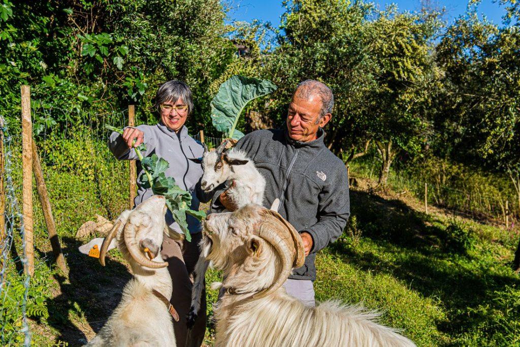 Feeding goats in a schist village garden in Central Portugal